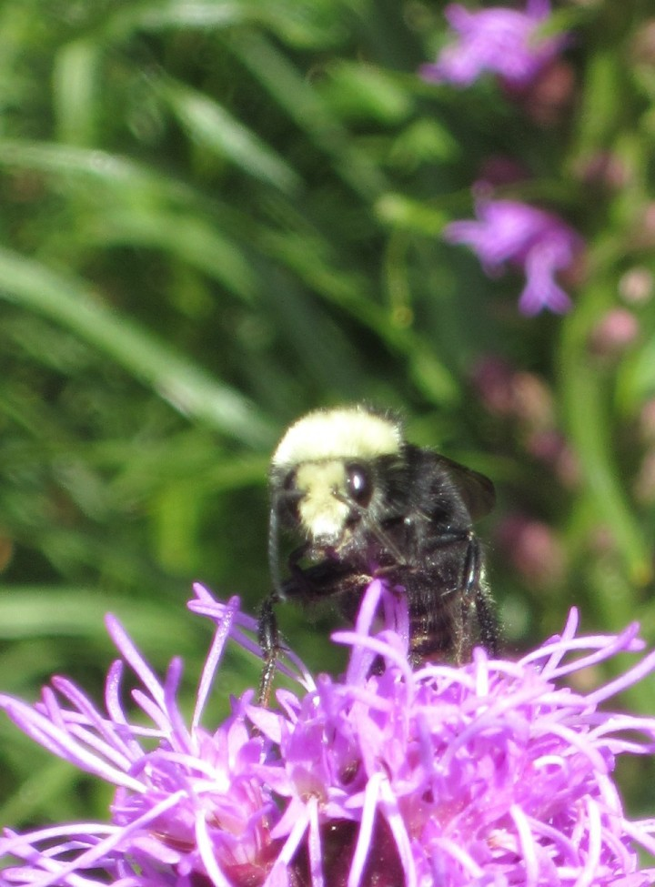 What a cutie pie. Bee 1. Photo by Lenee Cobb