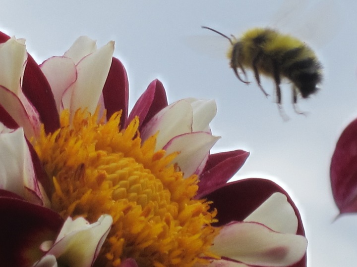Bee 4. Photo by Lenee Cobb